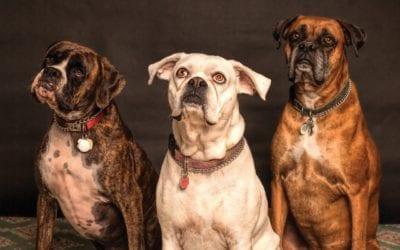 Guía para alojar mascotas en su alquiler vacacional